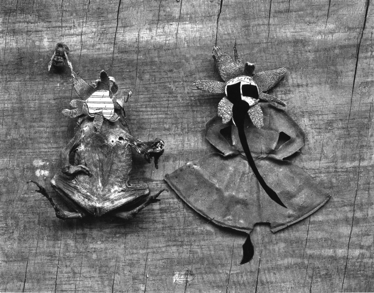 Frederick Sommer - Flower and Frog, 1947-1948 Gelatin silver print mounted to board, printed c. 1947-1948   Bruce Silverstein Gallery