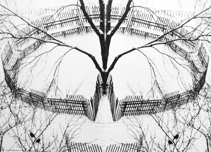 André Kertész - A Winter Garden, New York, 1970 Gelatin silver print, printed c. 1970 ; Bruce Silverstein Gallery