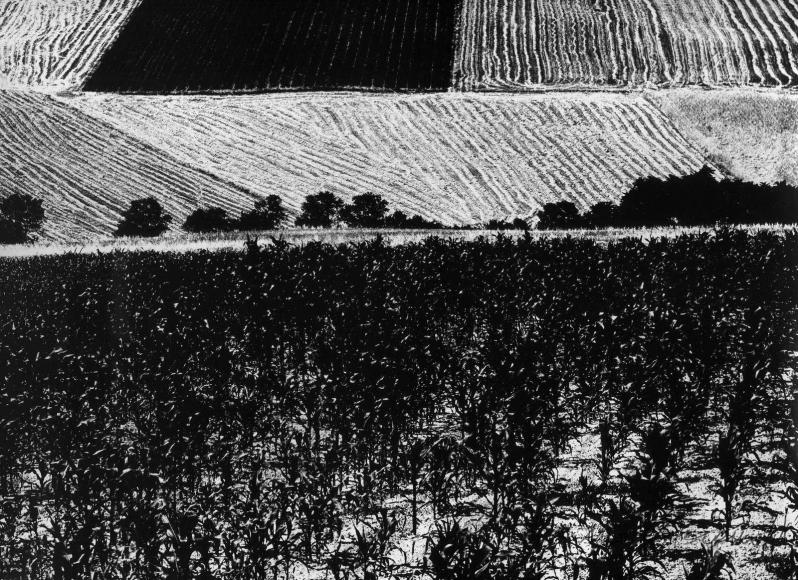 Mario Giacomelli - Metamorfosi della terra,1960-80(Metamorphosis of the land) | Bruce Silverstein Gallery