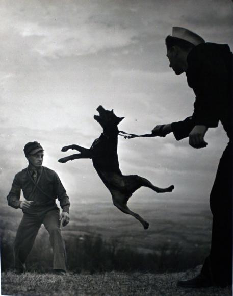 W. Eugene Smith - Early Work, Dog Training, c. 1940  | Bruce Silverstein Gallery