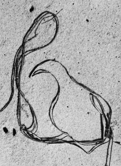 Aaron Siskind Seaweed 5, 1952 Gelatin silver print mounted to board, printed c.1960 10 x 8 inches