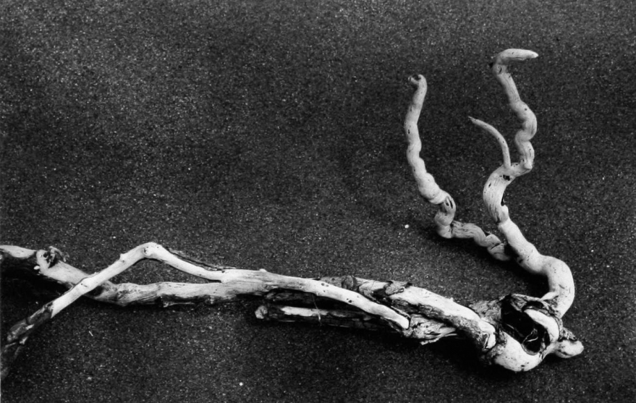 Aaron Siskind Driftwood, c. 1940 Gelatin silver print mounted to board, printed c.1940 4 1/2 x 7 inches