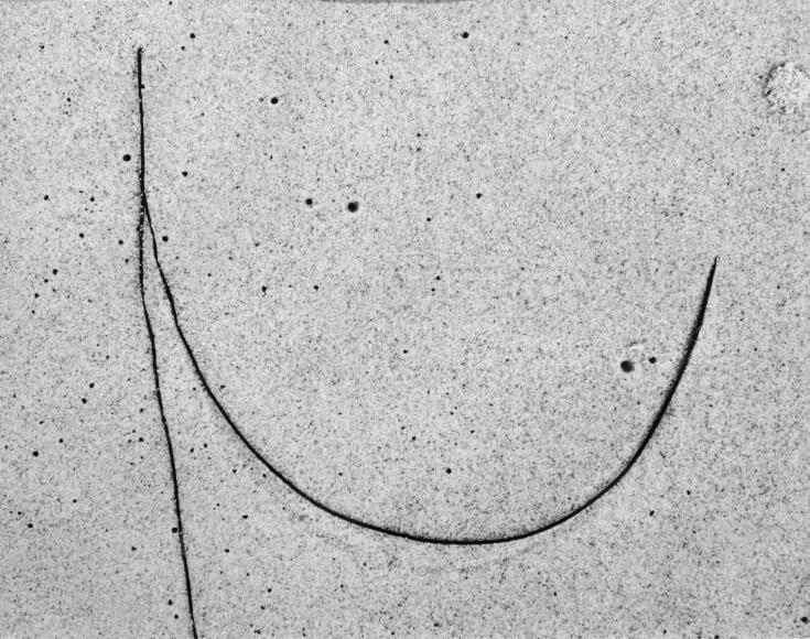 Aaron Siskind Seaweed #8, Martha's Vineyard, MA, 1953 Gelatin silver print mounted to board, printed c. 1960. 10 1/2 x 13 1/2 inches