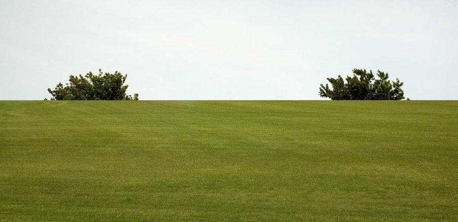 Eileen Neff - Tree Tops, 2008  | Bruce Silverstein Gallery