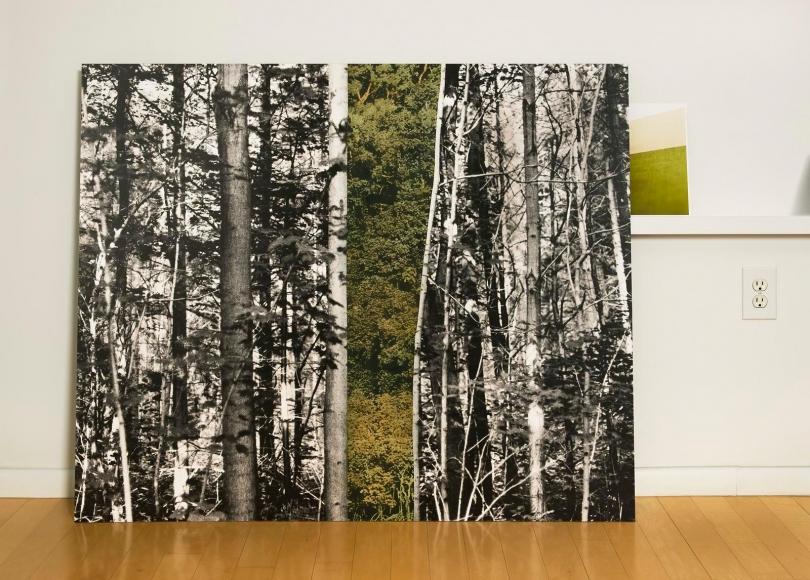 Eileen Neff - Forest in the Studio, 2014 | Bruce Silverstein Gallery