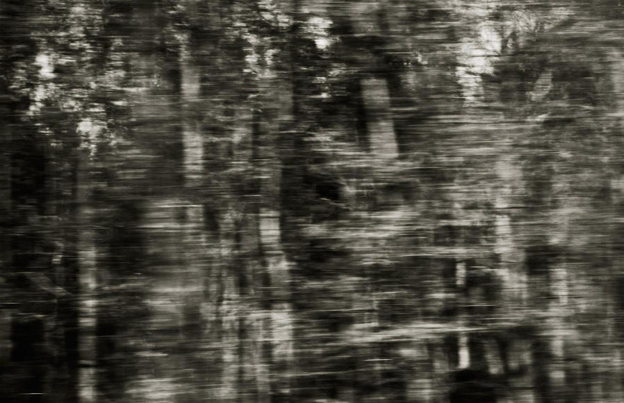 Eileen Neff - Assorted Deciduous,2014 | Bruce Silverstein Gallery