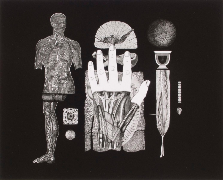 Frederick Sommer - Untitled, 1991 Gelatin silver print mounted to board, printed c. 1991 | Bruce Silverstein Gallery