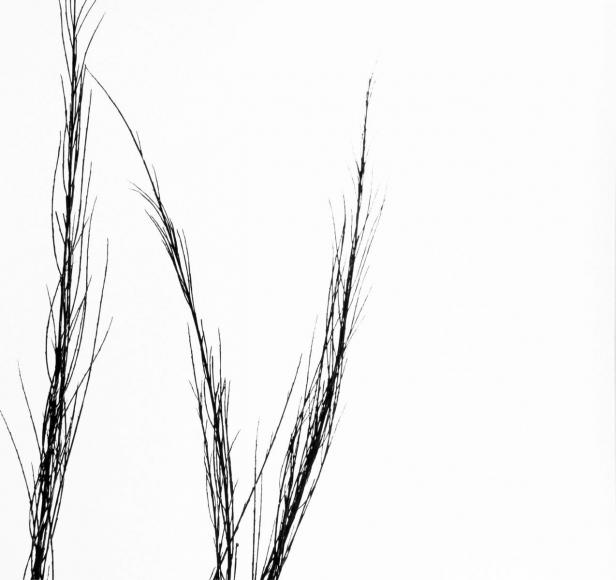 Aaron Siskind Viterbo Broom 13, 1967 Gelatin silver print, printed c.1967 10 x 8 inches