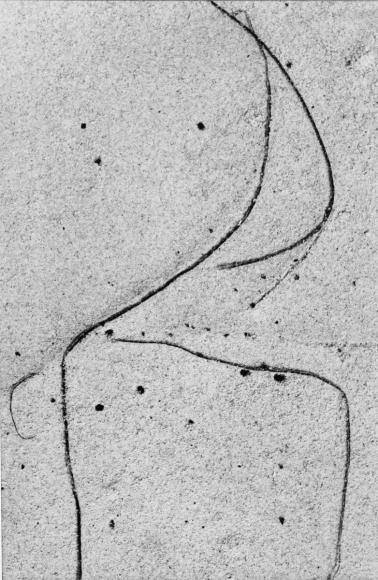 Aaron Siskind Martha's Vineyard 4, 1949 Gelatin silver print mounted to board, printed c.1949 13 1/2 x 9 inches