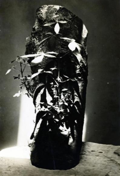 Constantin Brâncuşi - Trunk of a Chestnut Tree in the Studio, c. 1934 | Bruce Silverstein Gallery