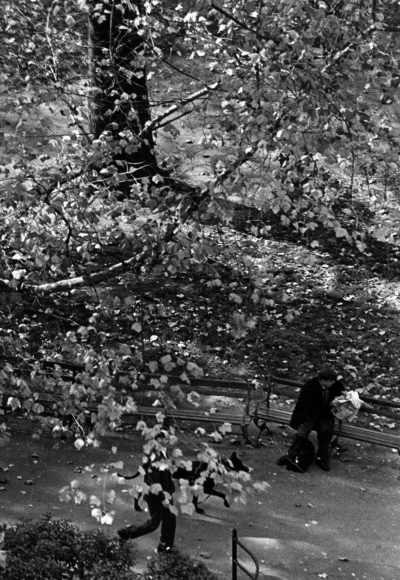 André Kertész - Tree and Dog Walk, October 29, 1967 Gelatin silver print, printed 1967 ; Bruce Silverstein Gallery