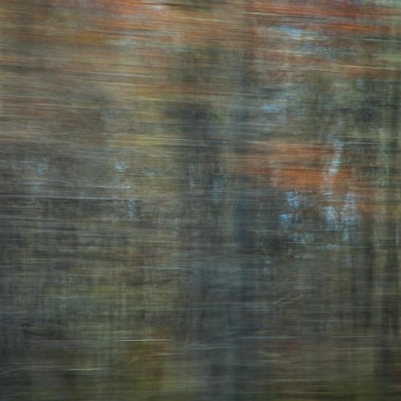 American Redstart, 2014 Chromogenic print. 17 x 17 inches