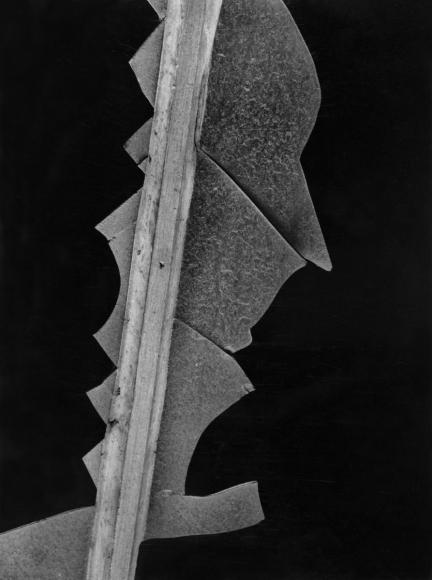 Aaron SiskindUntitled (New York Windows), 1946 Gelatin silver print mounted to board, printed c. 1946. 9 1/4 x 7 inches