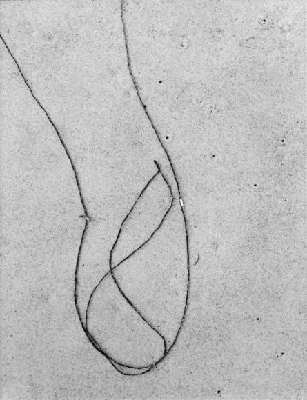 Aaron Siskind Seaweed 12, 1953 Gelatin silver print mounted to board, printed c.1955-60. 13 1/4 x 10 inches