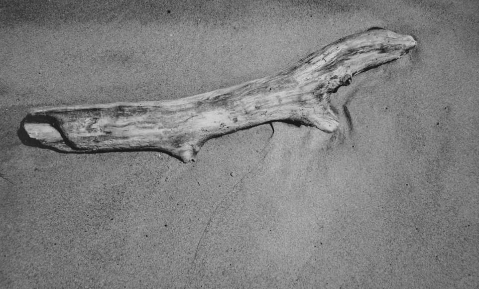 Aaron Siskind Driftwood, c. 1940 Gelatin silver print mounted to board, printed c.1940 4 3/4 x 7 3/4 inches