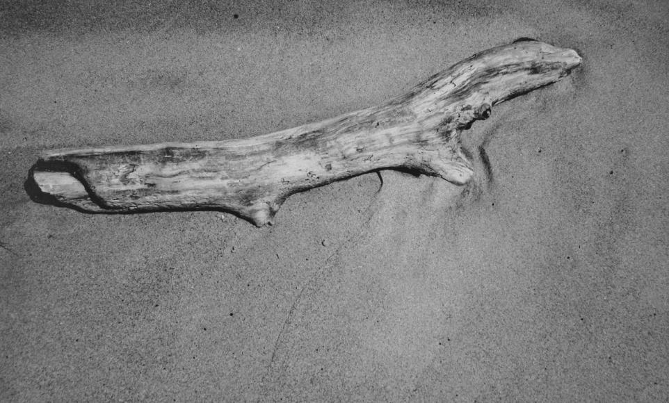 Aaron Siskind - Driftwood, 1940  | Bruce Silverstein Gallery