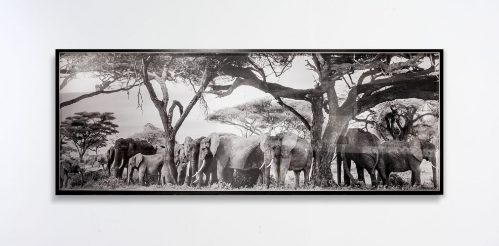 Peter Beard Untitled (Elephants and Baboons under Kilimanjaro), 1984