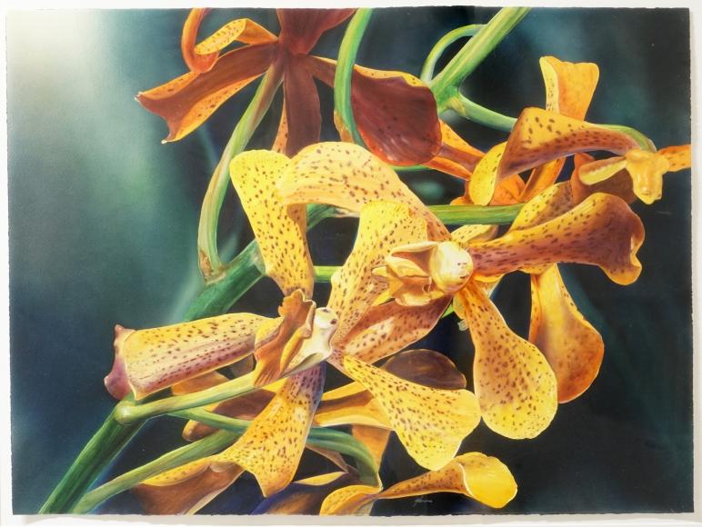Kirk Lybecker Orchid, c. 1993-94