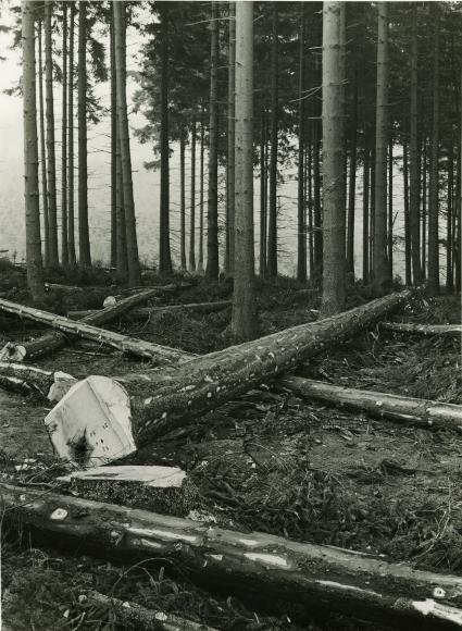 Albert Renger-Patzsch,Forest in Sauorland,c. 1952,gelatin silver print,9 x 6 ½ inches