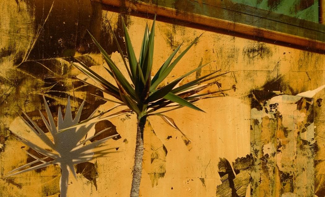 Dennis Farmer Painted Photograph palm tree