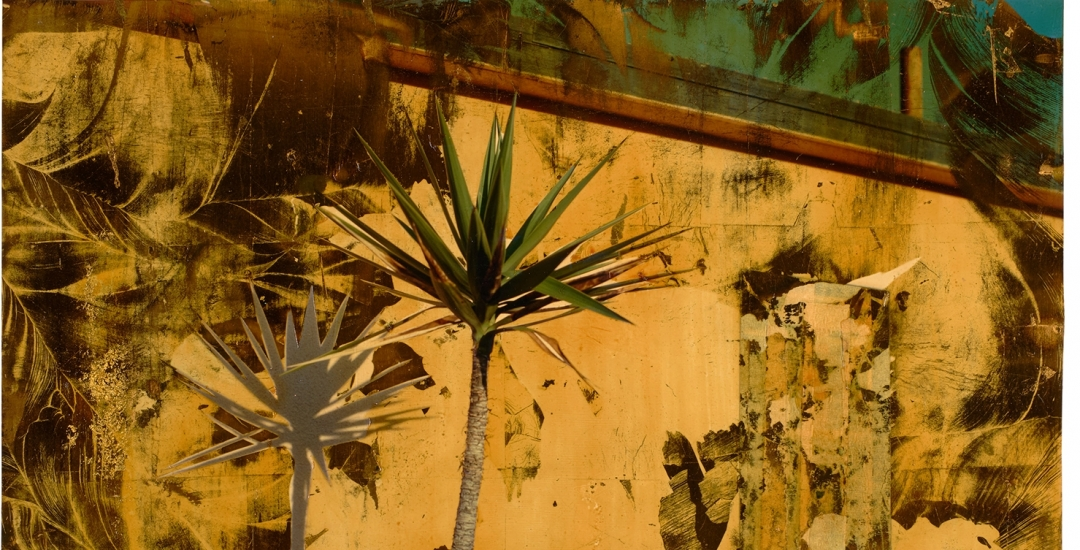 Dennis Farber Palm Tree Painted Photograph from the 1980s
