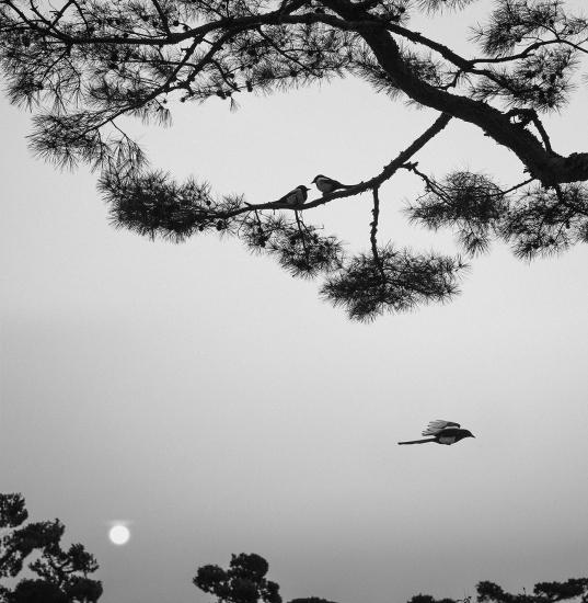 Pentti Sammallahti's Birds