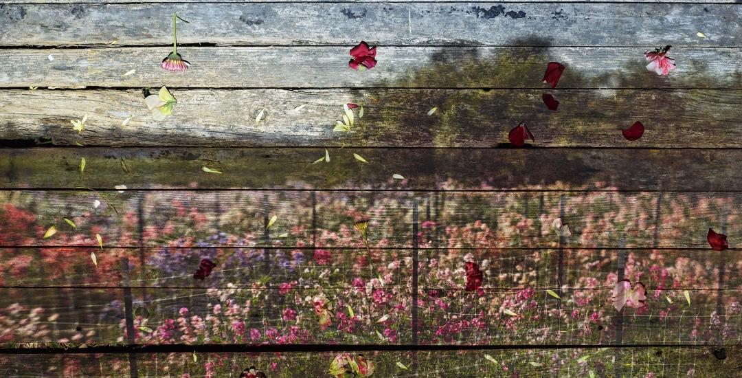 Abelardo Morell: Flowers for Lisa II