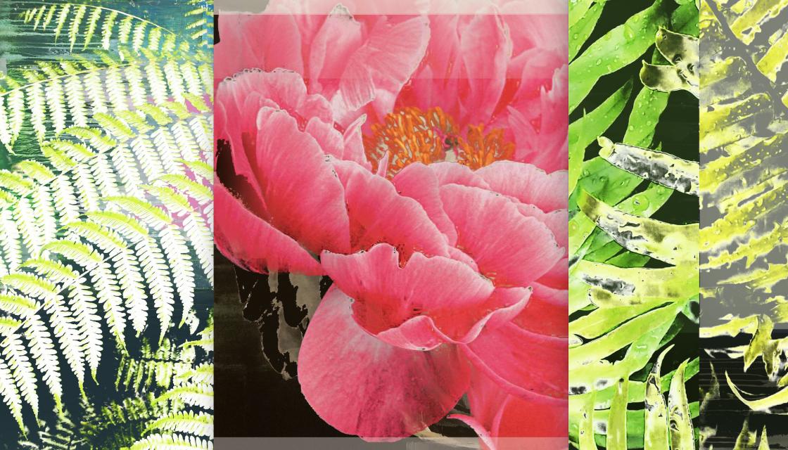 D.Paul DeRouen: No Flower Grows Unseen (Botanical Candy Series)