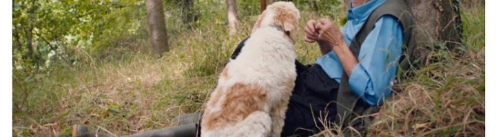 The Truffle Hunters Trailer: A Delightful Culinary Search for Treasure Backed by Luca Guadagnino