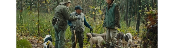 Review: The Truffle Hunters (2020) Dir. Michael Dweck & Gregory Kershaw