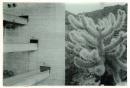 Sesc Pompéia, Cylindropuntia Fulgida, Veronika Kellndorfer, Christopher Grimes Gallery