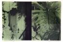 Ladeira da Misericórdia, Monstera Deliciosa, Veronika Kellndorfer, Christopher Grimes Gallery