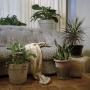 Christie Neptune  Drapery and Plants in Grandma's Living Room, 2019  Digital chromogenic print  30 x 30 inches