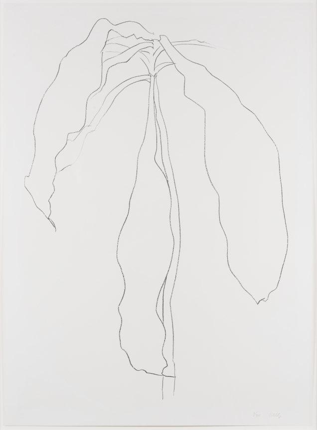 Ellsworth Kelly, Dracena II, from Series of Plant and Flower Lithographs