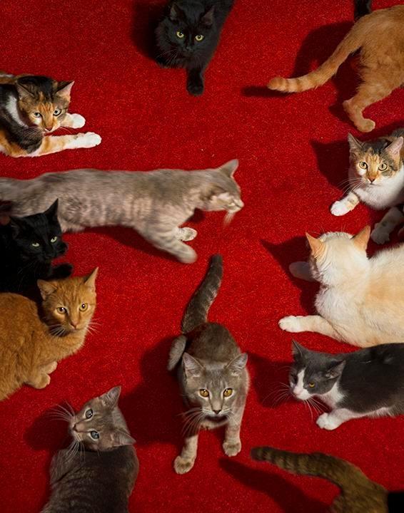 ALEX PRAGER Cats, 2017