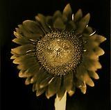 CLOSE: FLOWERS
