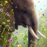 Robert Bissell Limited Edition Prints