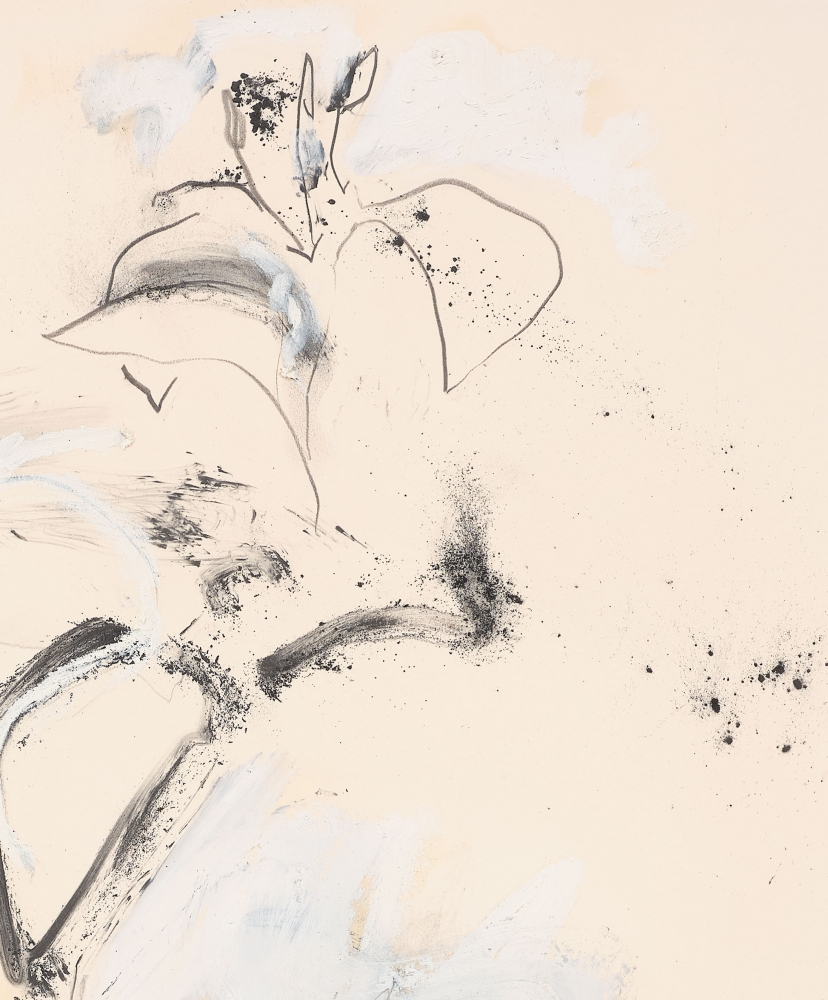 Joseph Havel  First Flowers (S.F.) 4, 2017  Graphite and oil paint on paper  30 x 23 inches  76.2 x 58.4 cm
