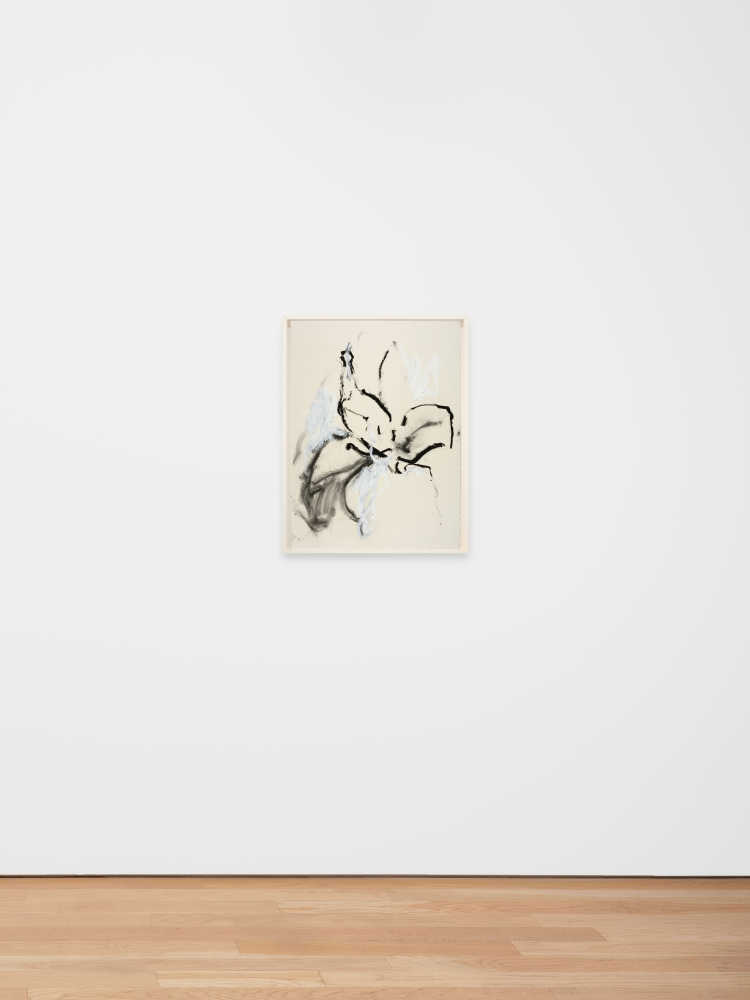 Joseph Havel  First Flowers (S.F.) 14, 2017  Graphite and oil paint on paper  30 x 23 inches  76.2 x 58.4 cm
