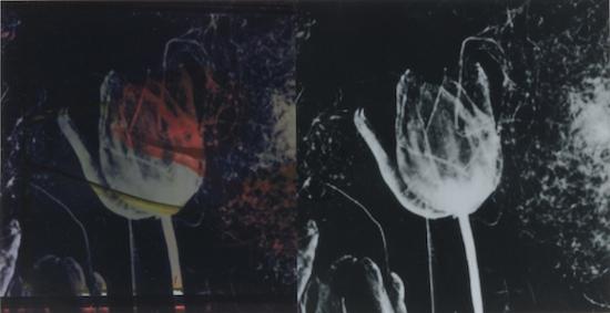 Extinct: Tulip, 2019