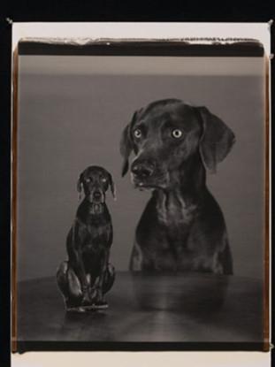 Splitting Image, 2005
