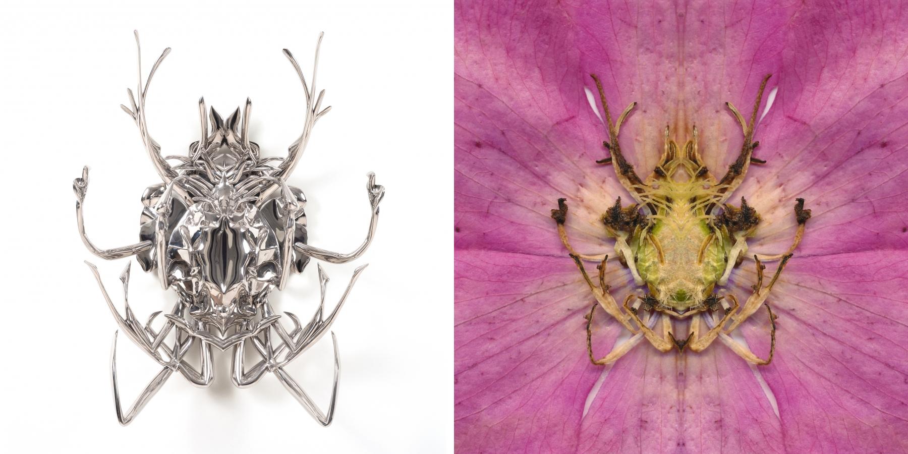 Pollinator next to center of Pink Clematis print