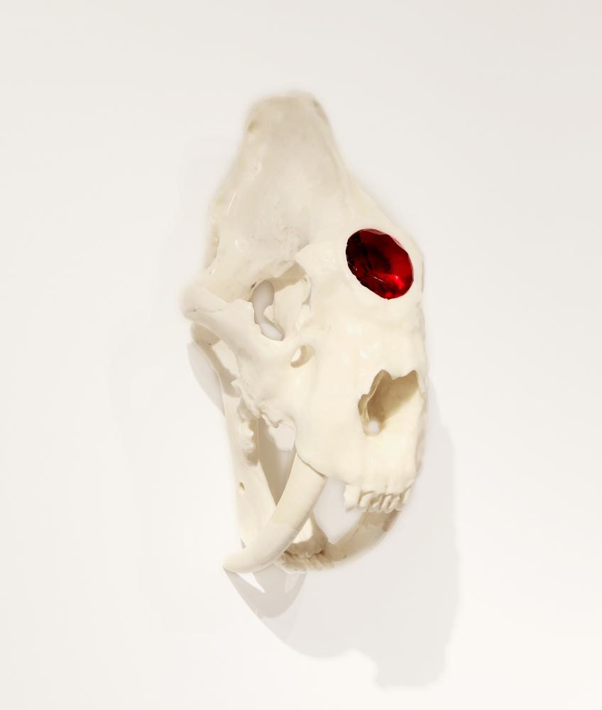 Semi-Feral Skull III