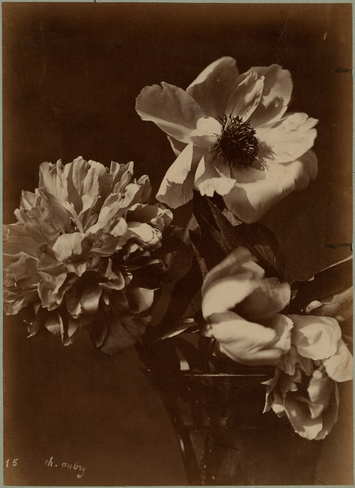 """Charles Hippolyte AUBRY (French, 1811-1877) Flowers in a vase, 1860s Albumen print 36.2 x 26.3 cm Signed and numbered """"15"""" in the negative"""