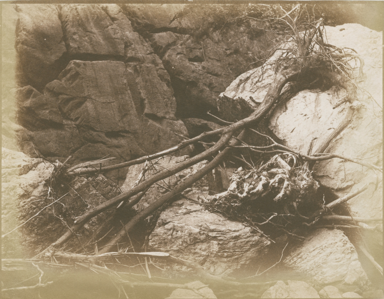 Hugh OWEN (English, 1808-1897) Branches and roots in dry riverbed, circa 1850 Salt print from a paper negative 17.3 x 22.4 cm image on 17.7 x 22.7 cm paper