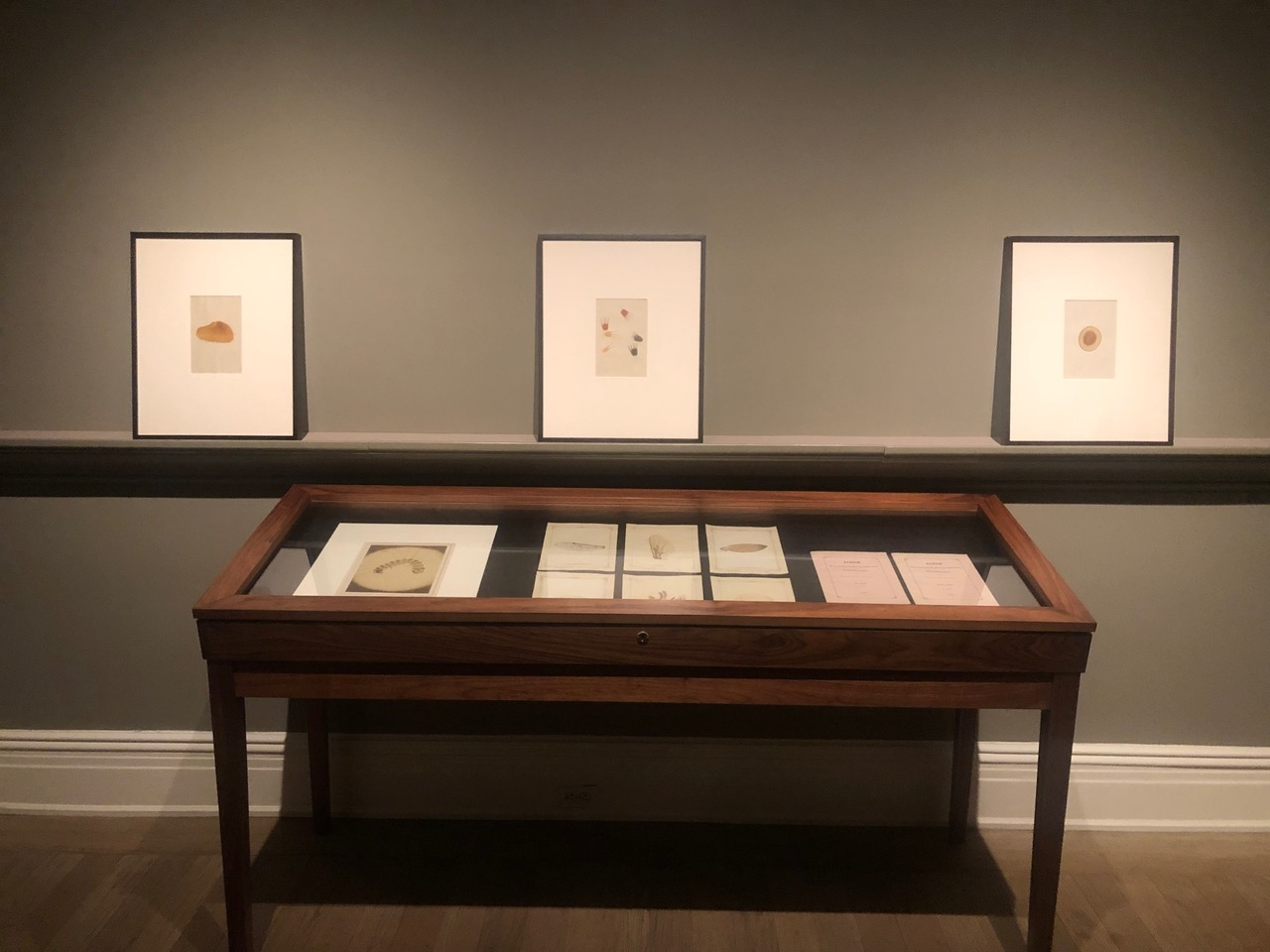 Critters: Hand-Colored Zoological Photomicrographs Installation View Five