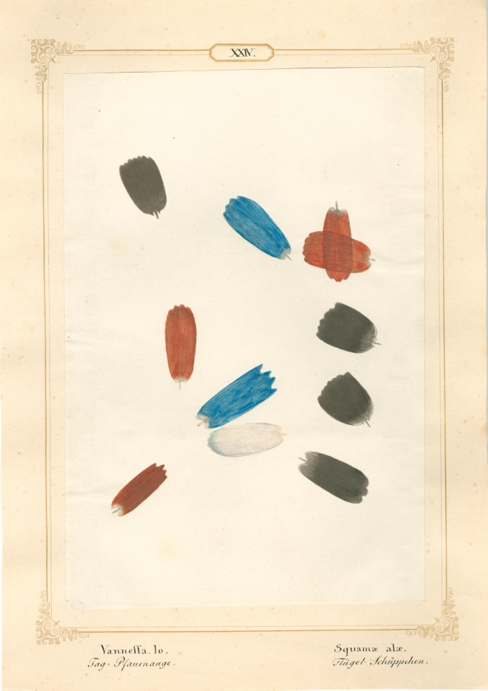 """Ernst HEEGER (Austrian, 1783-1866) """"Vanessa Io. Squamae alae."""" Aglais io. (Wing scales of peacock butterfly), 1860 Hand colored salt print from a glass negative 20.1 x 13.6 cm mounted on 26.0 x 18.5 cm sheet  Numbered and titled in Latin and German in ink on mount"""