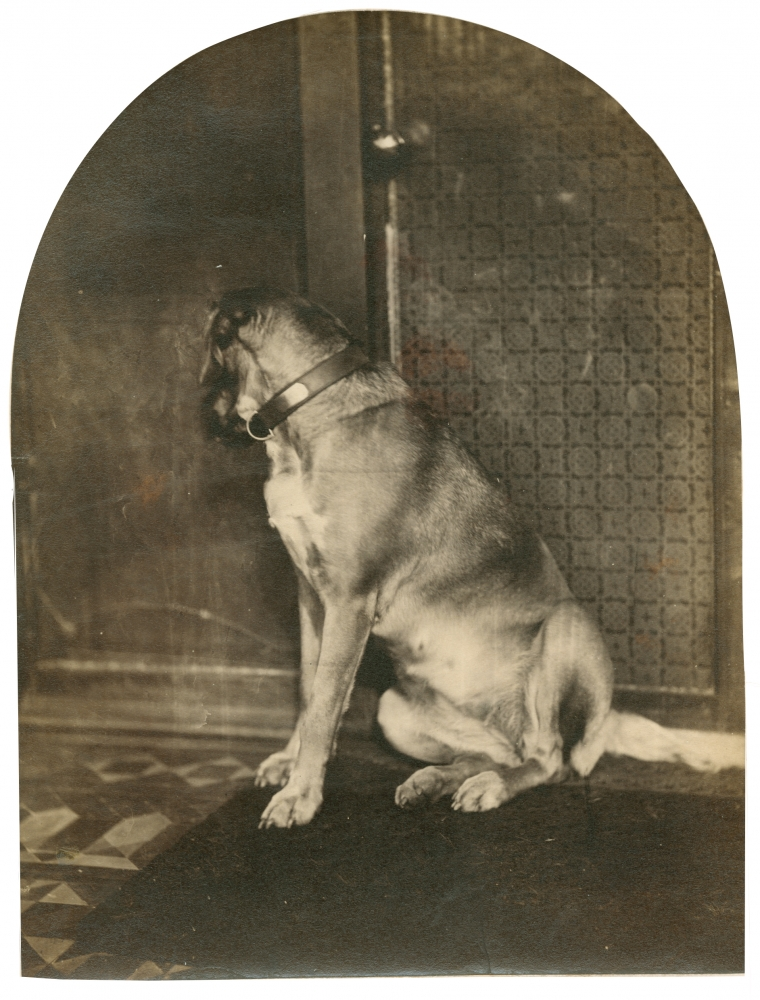 William James STILLMAN (American, 1828-1901) Dog in Crete, 1865-1868 Albumen print from a wet collodion glass plate negative 20.2 x 15.4 cm, arched top, mounted on 35.0 x 28.7 cm paper