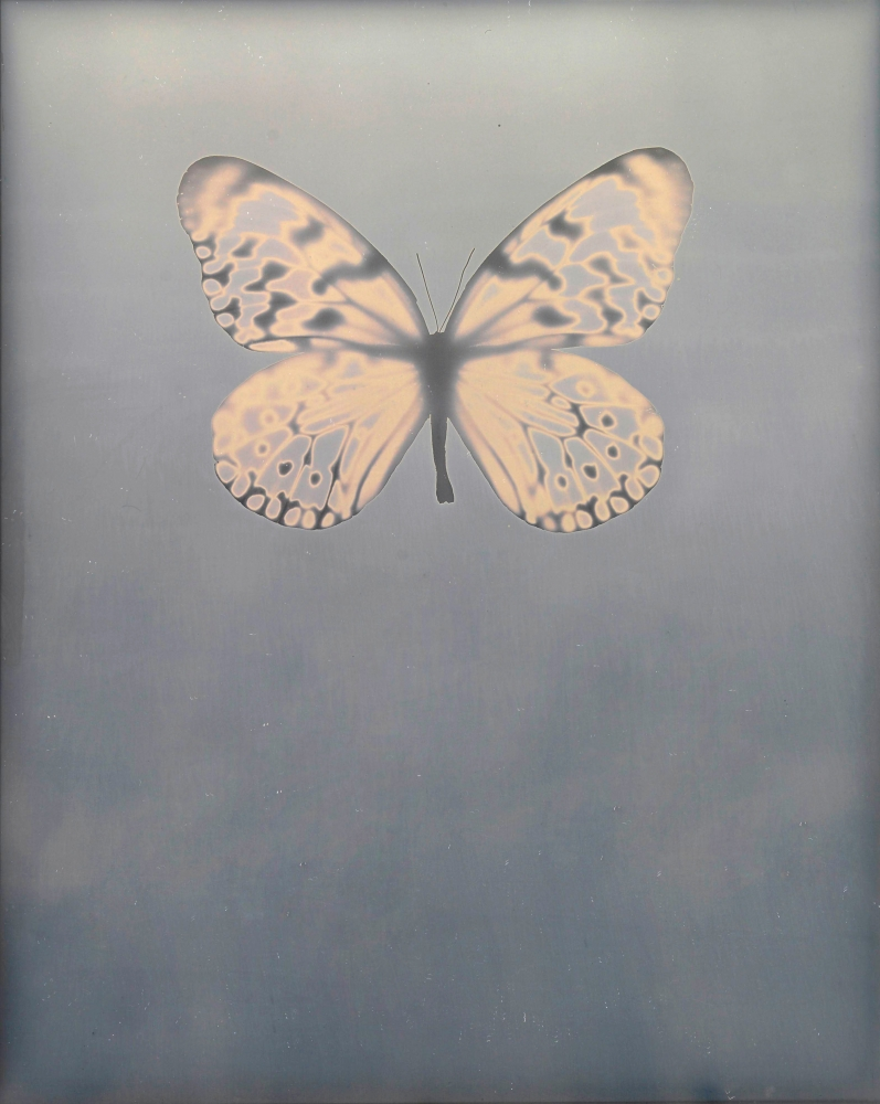 """Adam FUSS (American, born in England, b. 1961) Untitled """"For Allegra"""", 2009 Daguerreotype photogram 25.4 x 20.3 cm framed to 35.5 x 30.0 cm Signed and dated in blue ink on verso"""