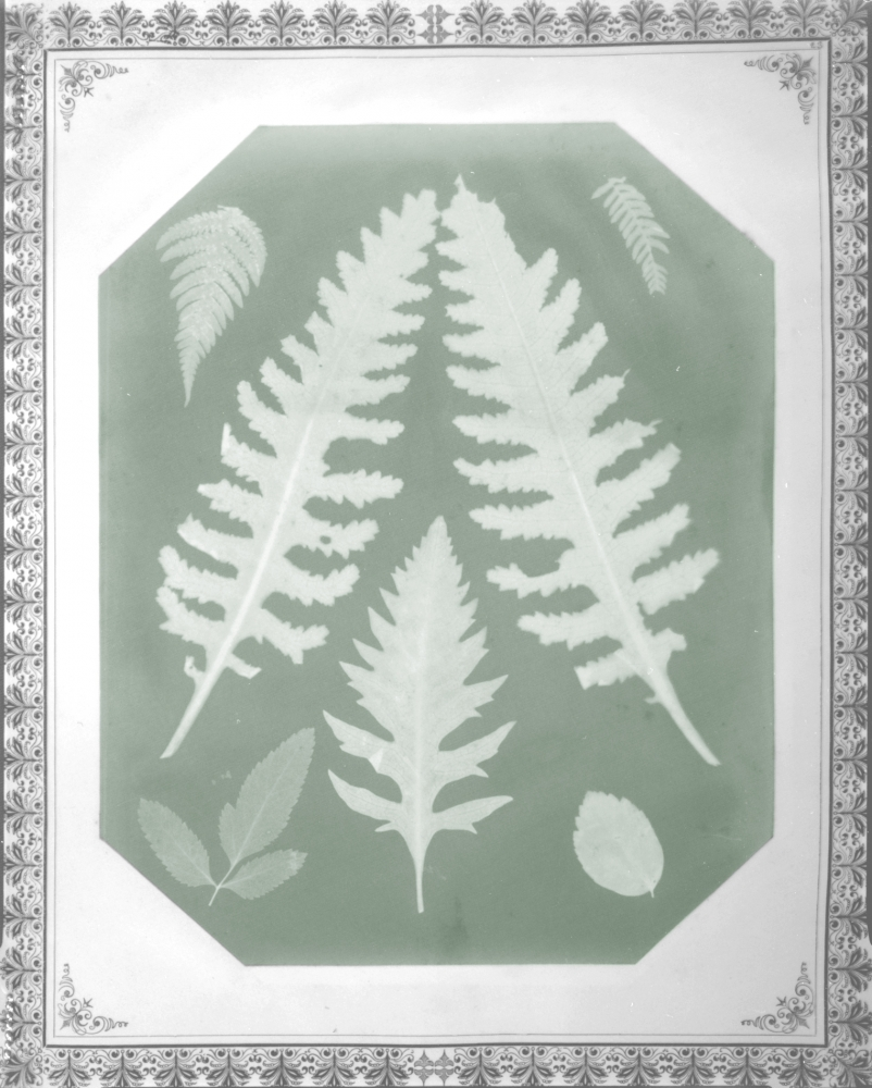 """Amelia E. BERGNER (American, 1853-1923) Seven botanical specimens, circa 1877 Photogram on chromate based printing-out paper 28.9 x 22.9 cm, corners clipped, mounted on 40.7 x 34.2 cm album page Partial watermark """"Linen Record"""" visible"""